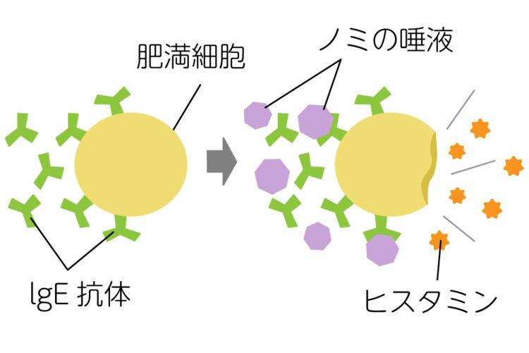 ノミアレルギーのメカニズム