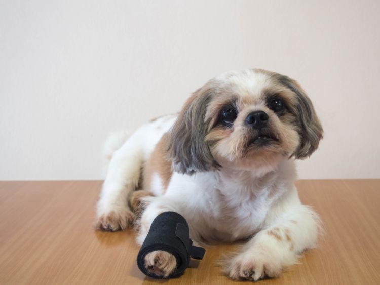 考えられる主な病気②【犬の骨折】