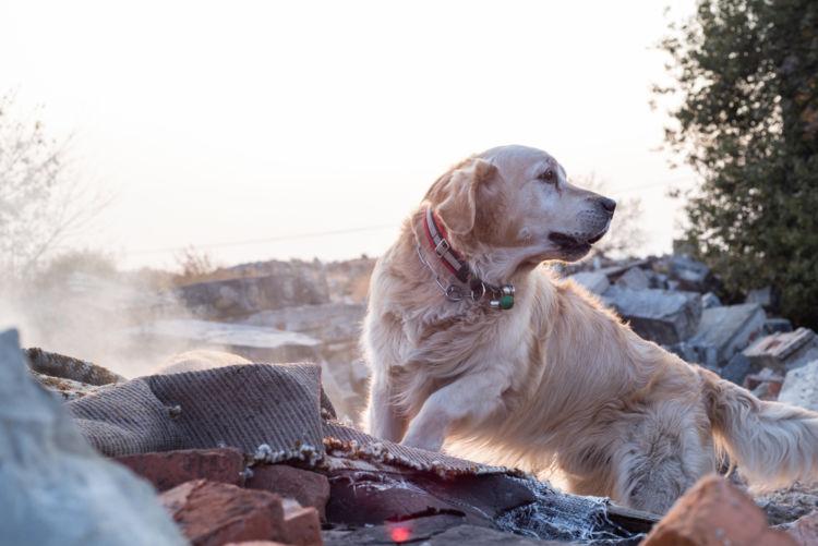 【犬と防災】災害時の愛犬との避難所生活や心構え、防災グッズ【チェックリスト付き】