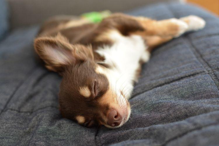【弁護士Q&A】愛犬の熱中症の死亡事故(トラブル)、ペットホテルに損害賠償請求は可能?