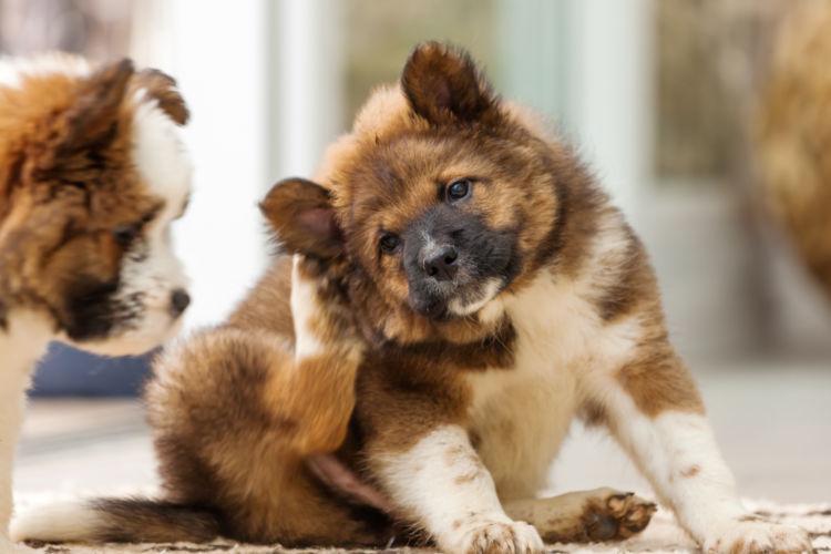犬の外耳炎【症状】