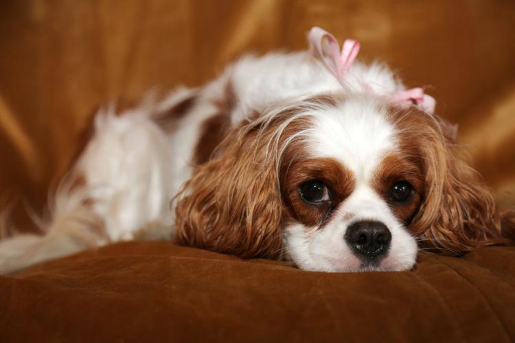 犬の外耳炎と間違えやすい病気