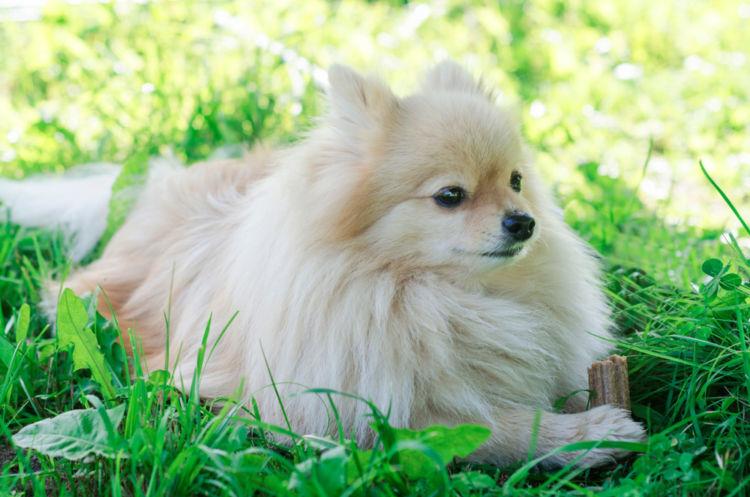 犬のアトピー性皮膚炎【治療方法】