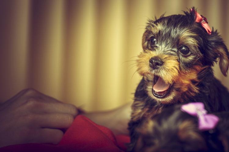犬の頭部と他の部位の震える原因③【ホルモン系のトラブル】