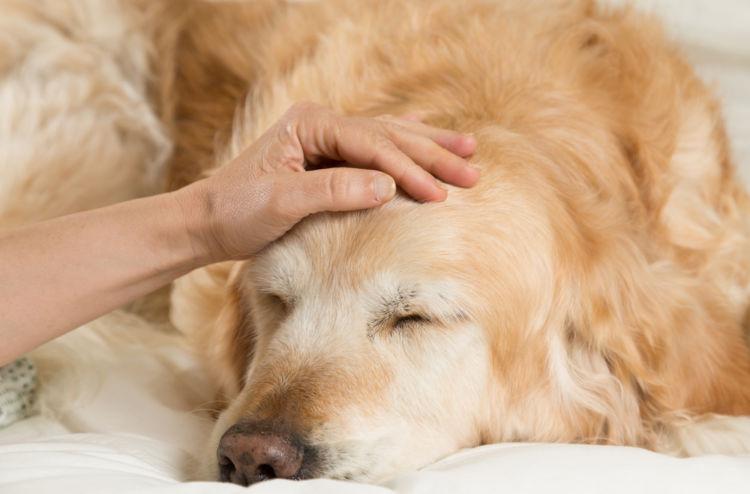 犬の頭が震える主な病気③【脳炎】