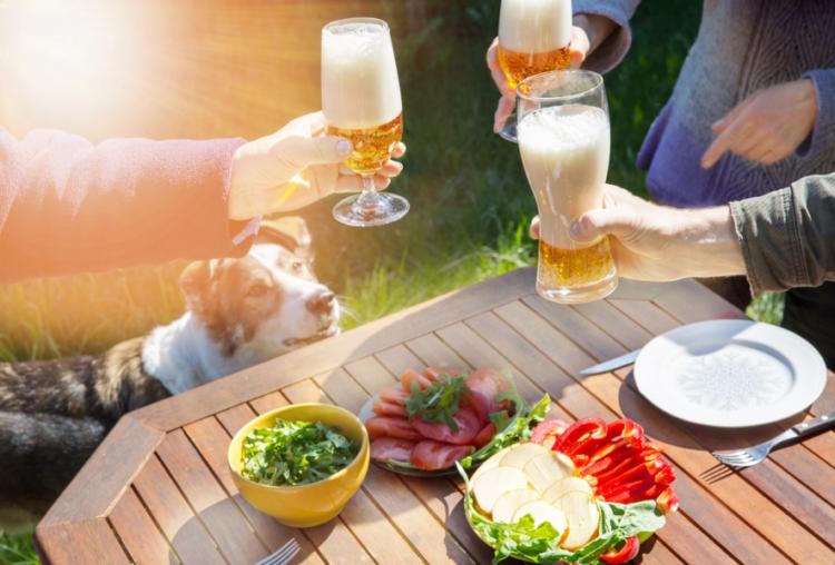 【獣医師監修】犬にビール(アルコール)を飲ませては絶対ダメ!理由と飲んでしまった時の対処法!