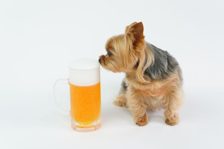 犬用ビール