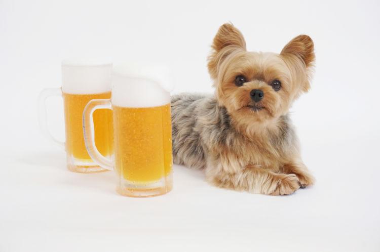 犬がビールを飲んでしまった場合のまとめ