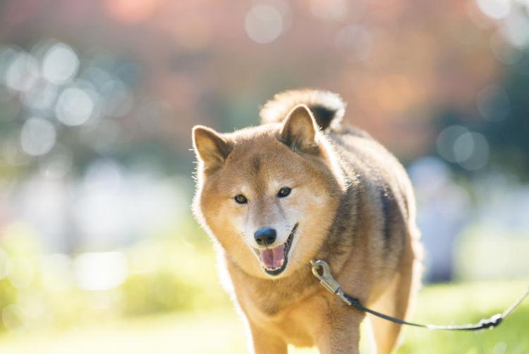 【シニア】になった愛犬の健康寿命を延ばすために重要なことは?