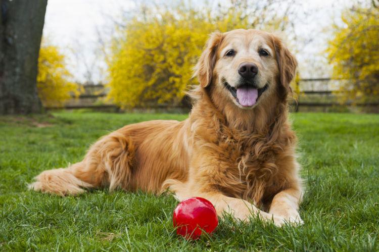 愛犬が健康で長生き