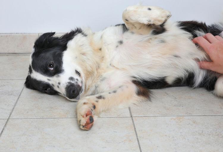 オリゴ糖と食物繊維が犬のお腹の調子を整える