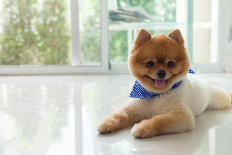【子犬】や【老犬】にナッツを与えても大丈夫?