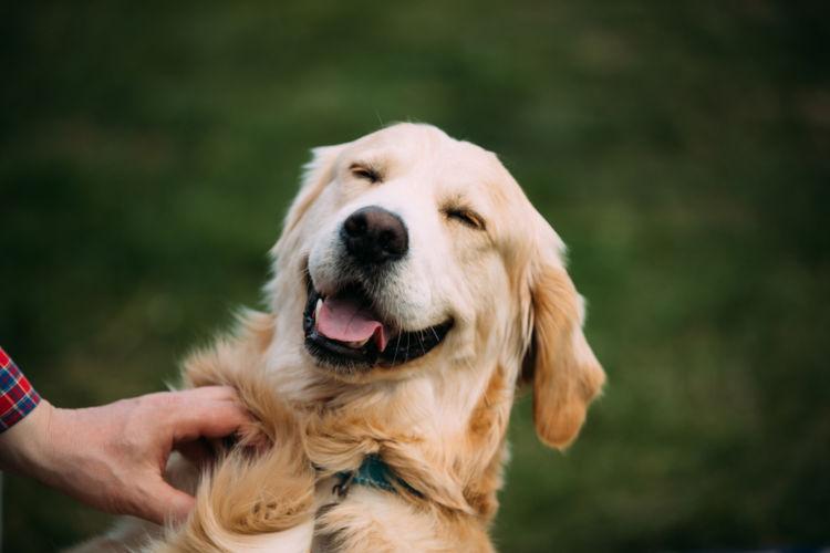 犬に与えるナッツ【まとめ】