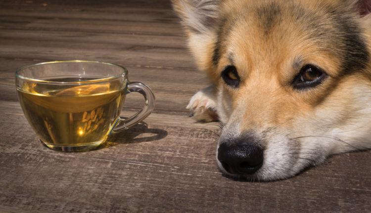 カフェインを含むお茶は犬には注意が必要!