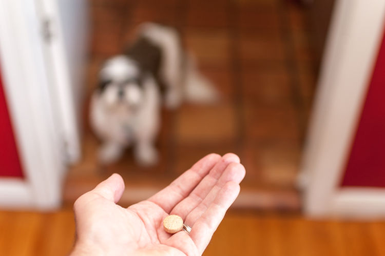 犬が薬を飲まない原因・理由は?