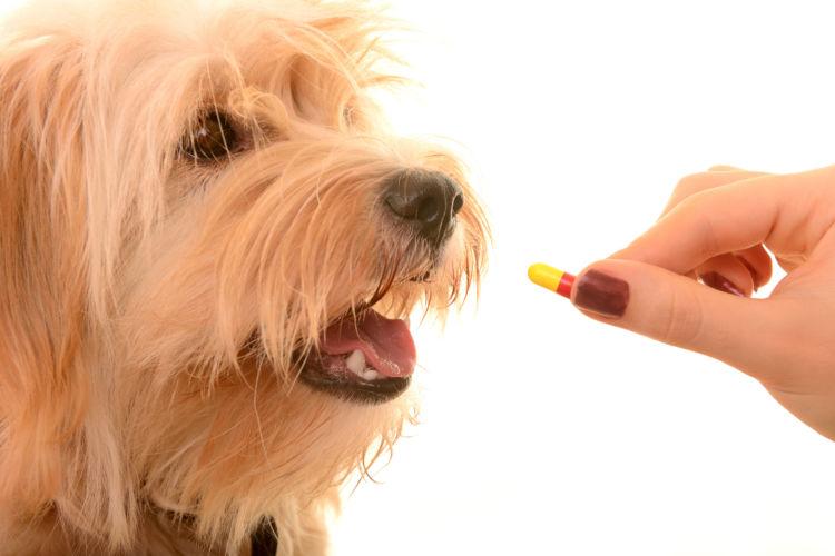 犬に薬を飲ませる際のポイントやコツは?