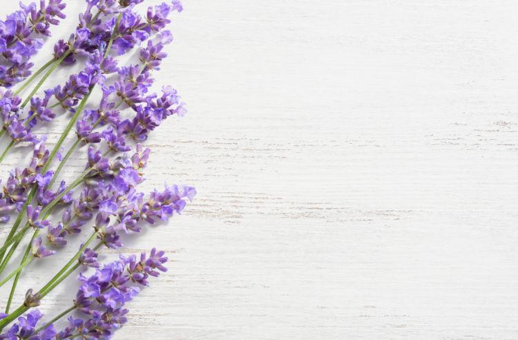 ラベンダー(Lavender)(シソ科)