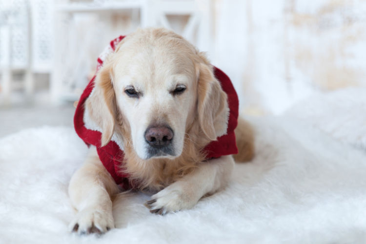犬がハーブティーを飲んでしまった場合の治療費や治療法は?