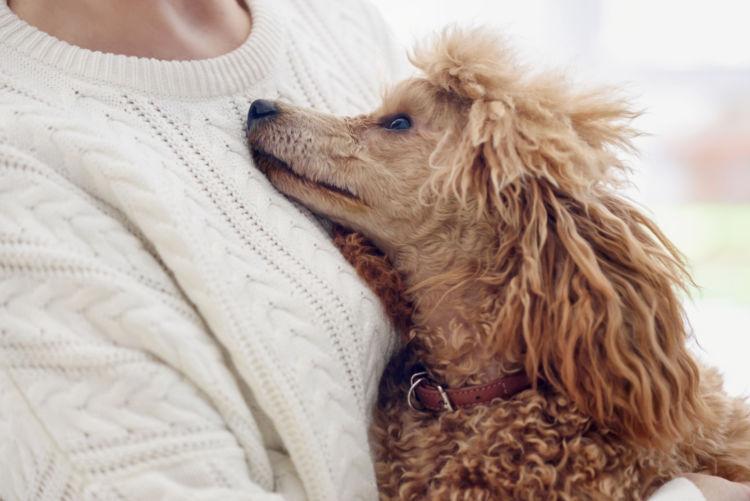 犬の【平均寿命】まとめ