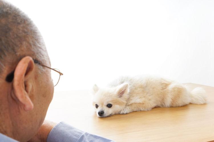 老犬ホームが生まれた背景③「核家族化により、犬の世話をする人が限られる」