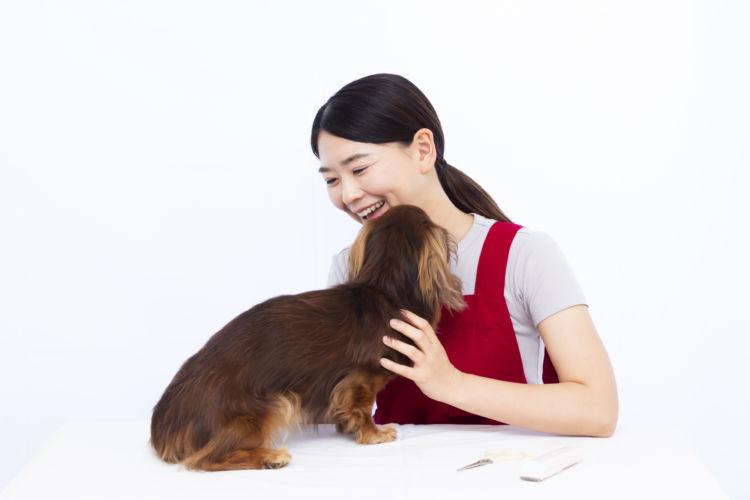 【老犬ホーム】タイプ(種類)