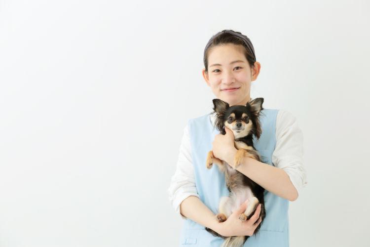 【老犬ホーム】料金・費用