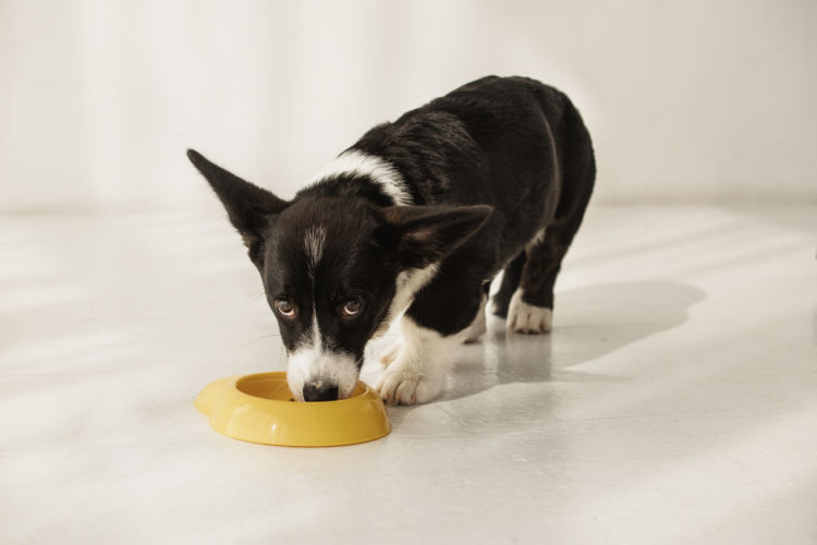 犬に「蕎麦」を与えた場合のメリットや効果!