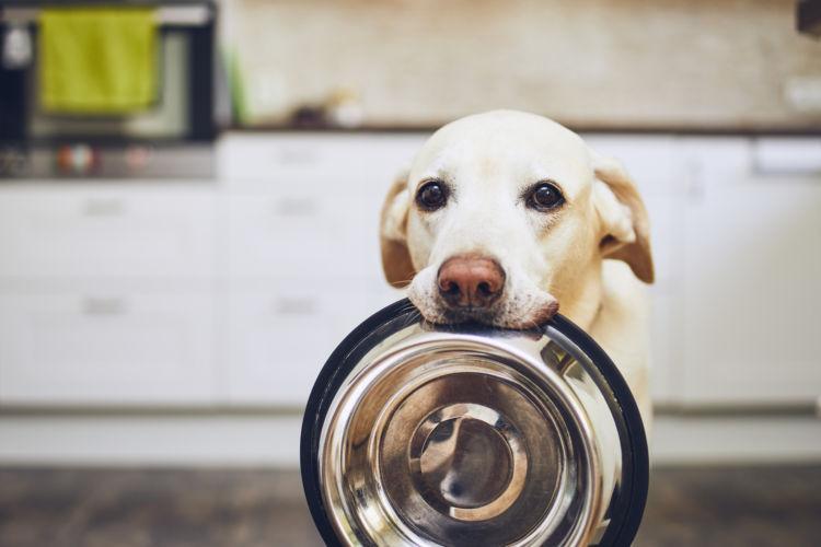 犬に「蕎麦」を与える際の適量は?(小型犬・中型犬・大型犬)