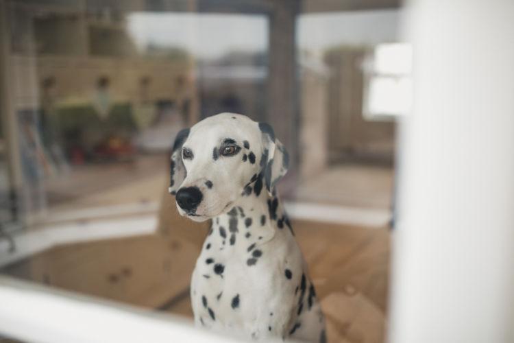犬の「ストレス」の原因は?