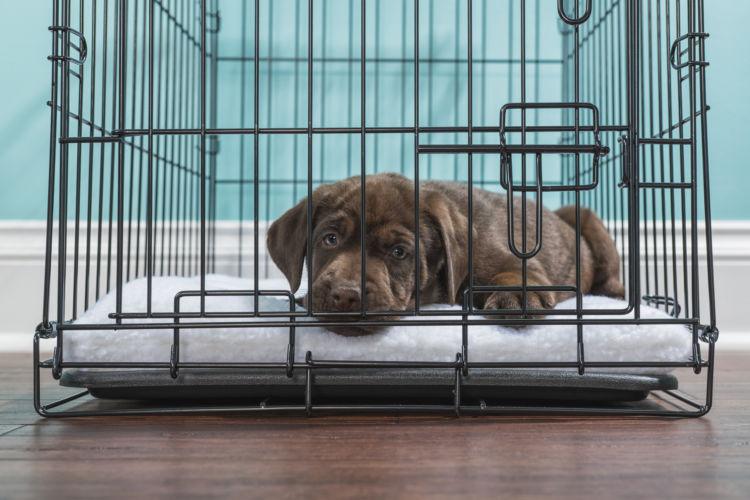 犬が「ストレス」で発症する病気は?