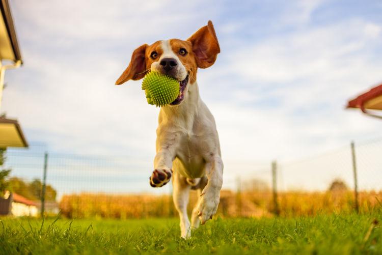 犬の「ストレス」の発散方法や解消方法!