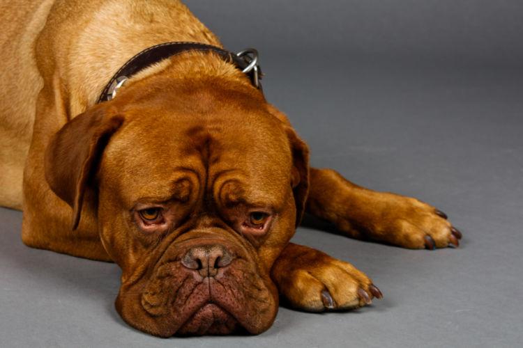 慢性 犬 ストレス