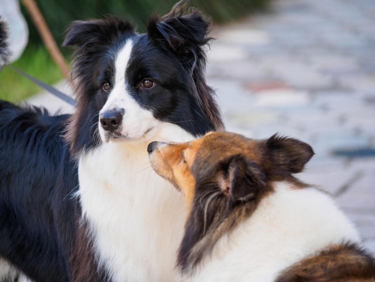愛犬 ストレス 解放