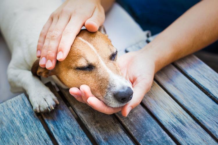 【獣医師監修】犬のてんかん、発作で突然死する?原因や症状、治療法は?後遺症や治療費、予防法!
