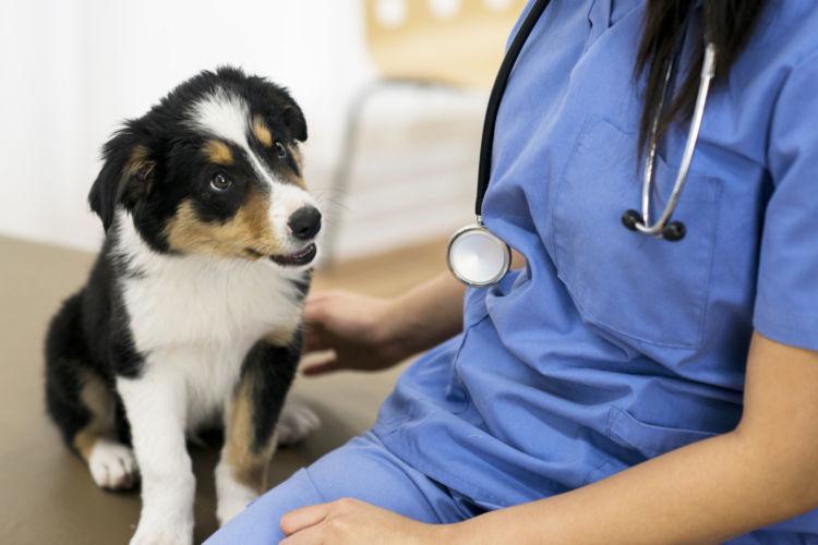 犬の「てんかん」の検査方法と診断は?