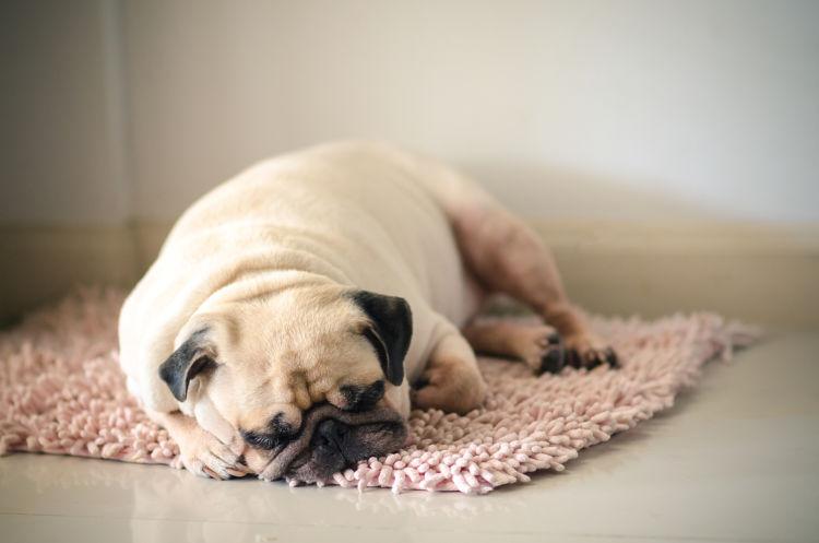 犬 キシリトール 誤飲 低血糖