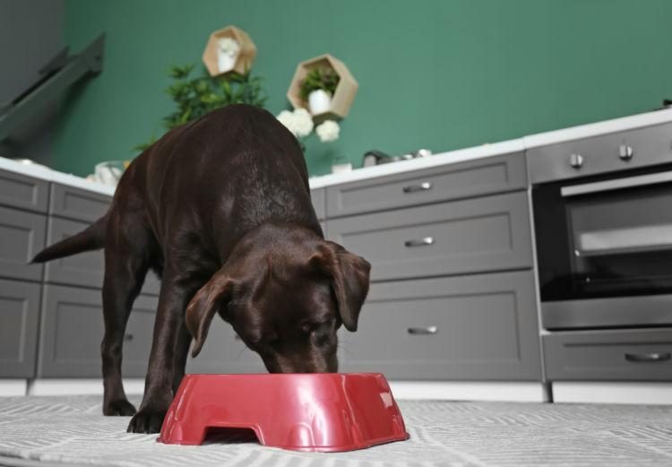 りんごジュースを与える際の注意点④「水分過多に注意!」