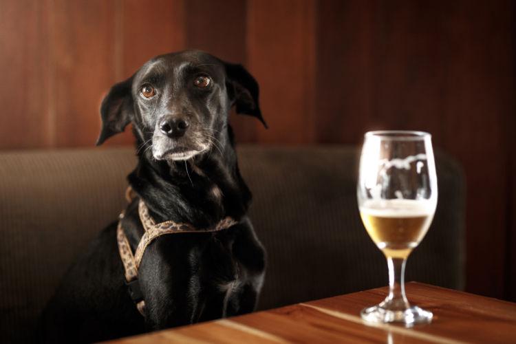 犬にアルコール(お酒)を飲ませていけない理由は?