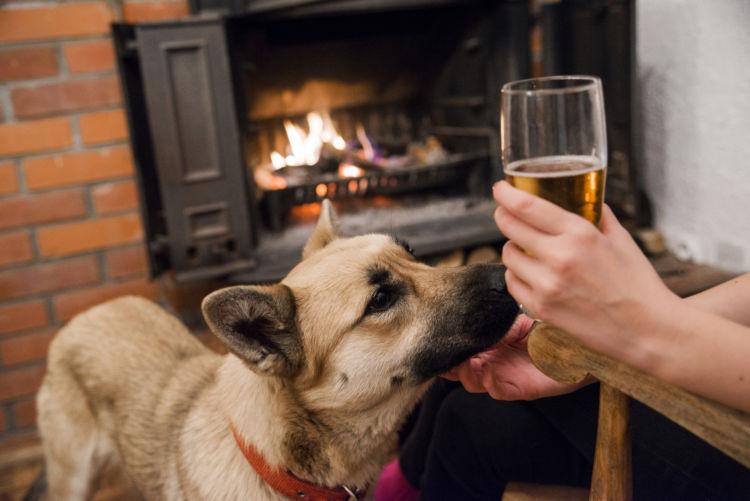 犬がアルコール(お酒)を誤飲してしまった場合の治療法や治療費は?