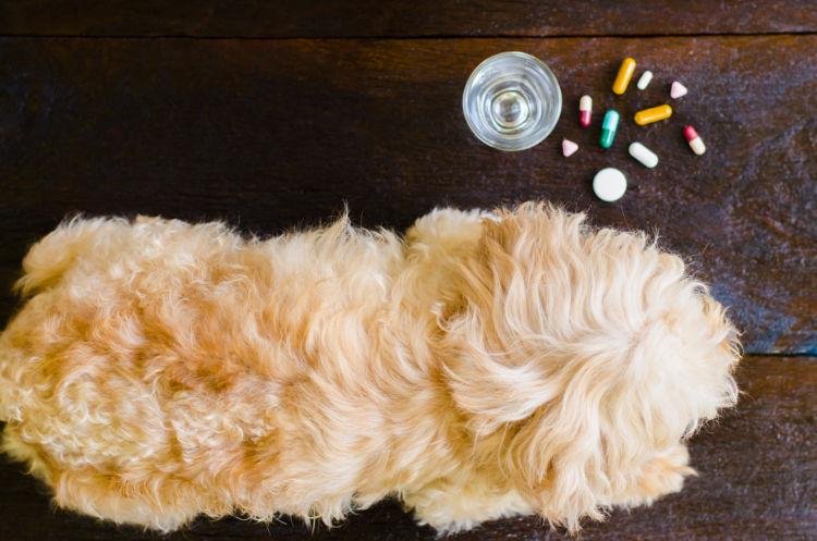 老犬の下痢「予防対策」⑥【サプリメント】