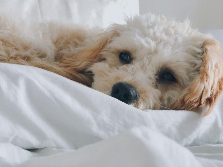 老犬の夜鳴き「対策」③【睡眠の時間帯】