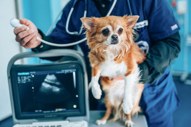 老犬の夜鳴き「予防方法」⑦【健康診断】