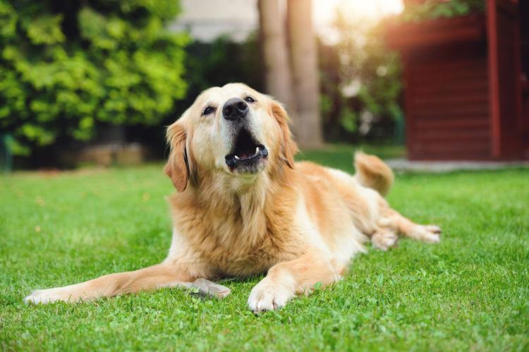 犬の「ストレス」の症状は?