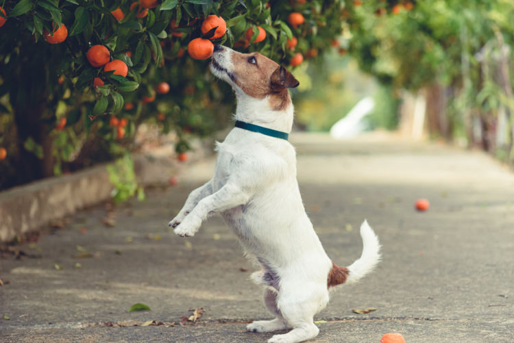 犬がみかんを食べても大丈夫!