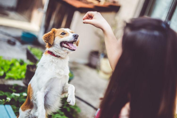 犬にみかんを与える際の【注意点!】