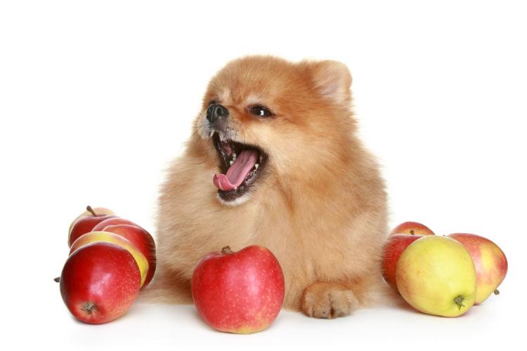 犬にりんごを与えた場合の【メリット】や【効果】は?