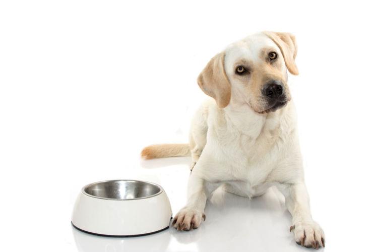 犬にキャベツを与える際の【適量】は?(小型犬・中型犬・大型犬)
