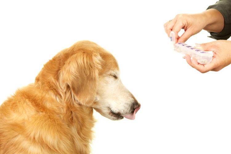 老犬の夜鳴き【予防方法】は?(サプリメント・健康診断など)