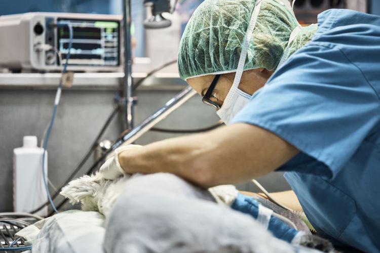 メス犬の【避妊手術】のメリット、適した時期や注意点は?