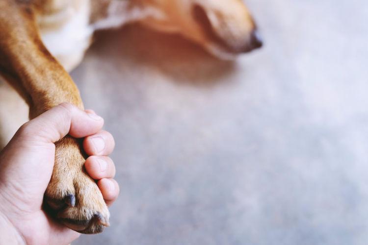 犬が「チョコレート」を誤食した場合の応急処置と対処法は?